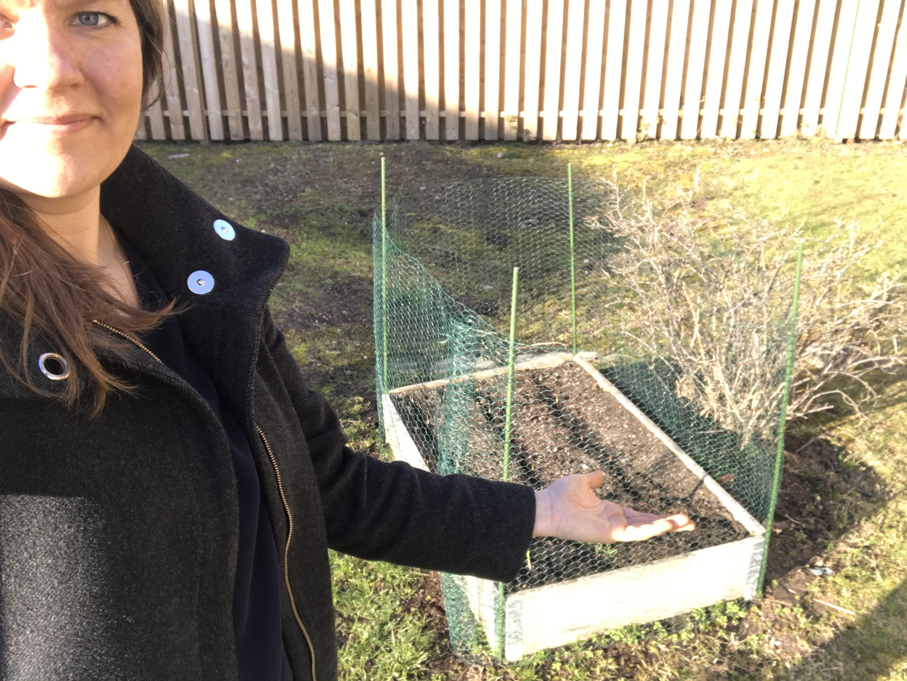 Inhägnad pallkrage - mot kaniner
